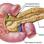 Что такое узи поджелудочной железы и кому нужно его проходить