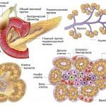Панкреонекроз поджелудочной железы ещё одна болезнь деструктивного образа жизни