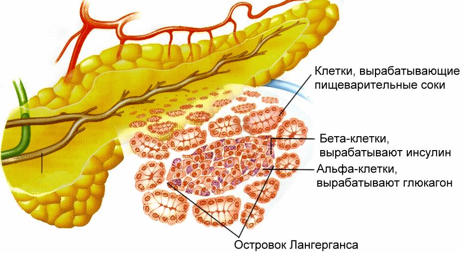 дисбактериоз кишечника запах изо рта