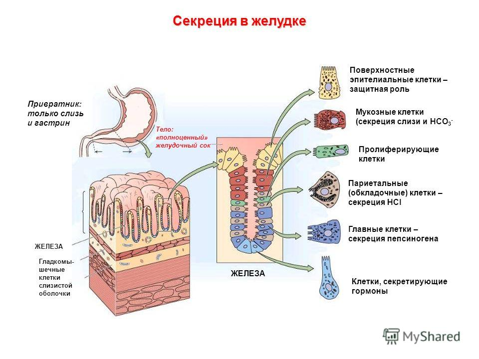 Как лечить гепатит с и как им можно заразиться